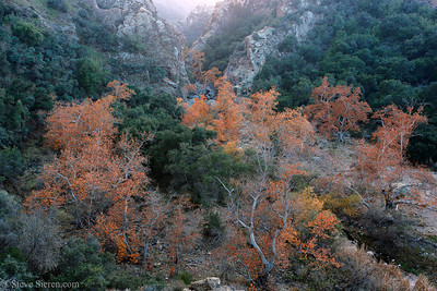 Fall Color Southern California Santa Monica Mountains