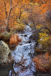 Fall color in the Santa Monica Mountains