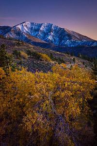 Mt Baldy Snow Fall Foliage Display