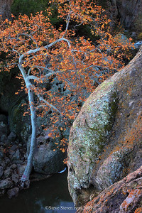Friends are as companions on a journey, who ought to aid each other to persevere in the road to a happier life. ~Pythagoras  There must be some kind of relationship between these the tree and boulders in this beautiful places.  Sycamore tree surrounded by boulders in fall / autumn in the Santa Monica Mountains near Los Angeles.