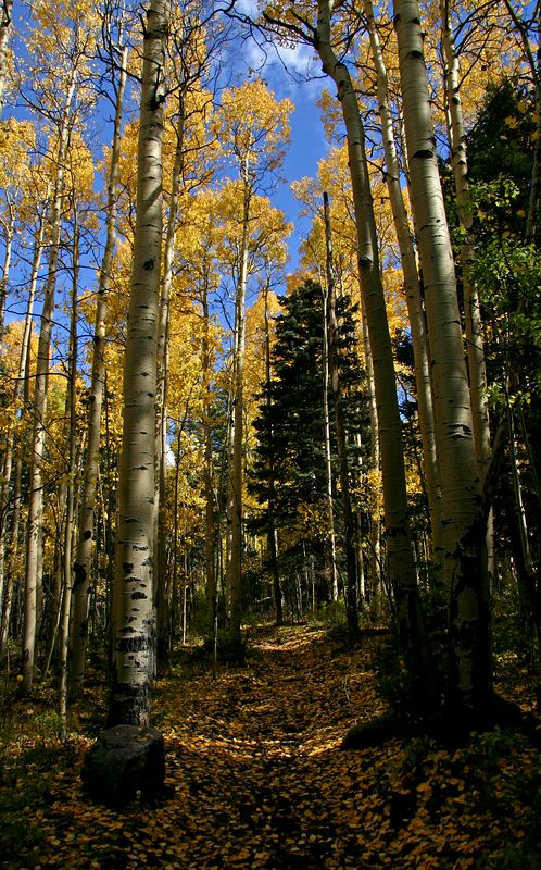 Golden fall trail in the Pecos Wilderness