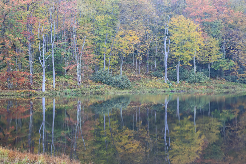 Mirror Lake, Canaan Valley, WV