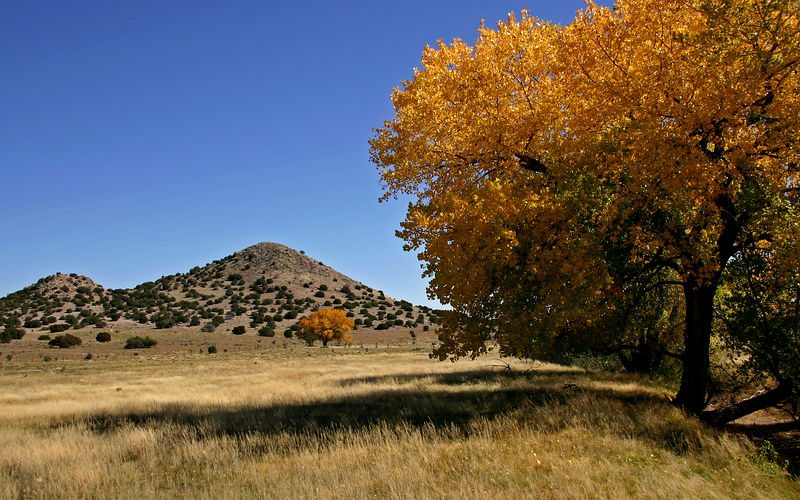 Cottonwoods in prairie near Santa Fe