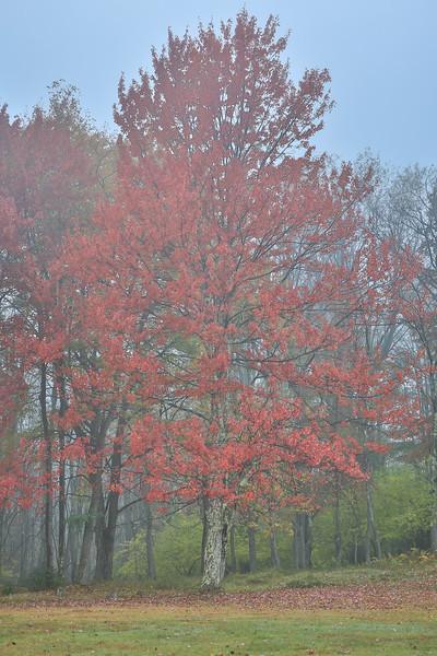 Fall Tree, Blackwater Falls State Park, WV