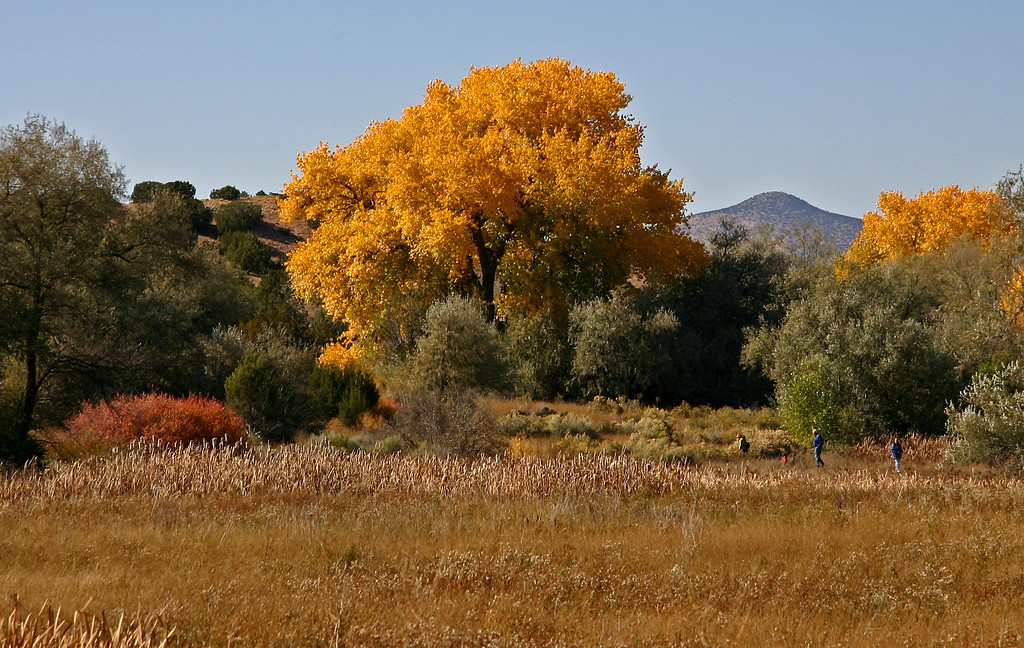 Cottonwoods and Three Leaf Sumac just west of Santa Fe