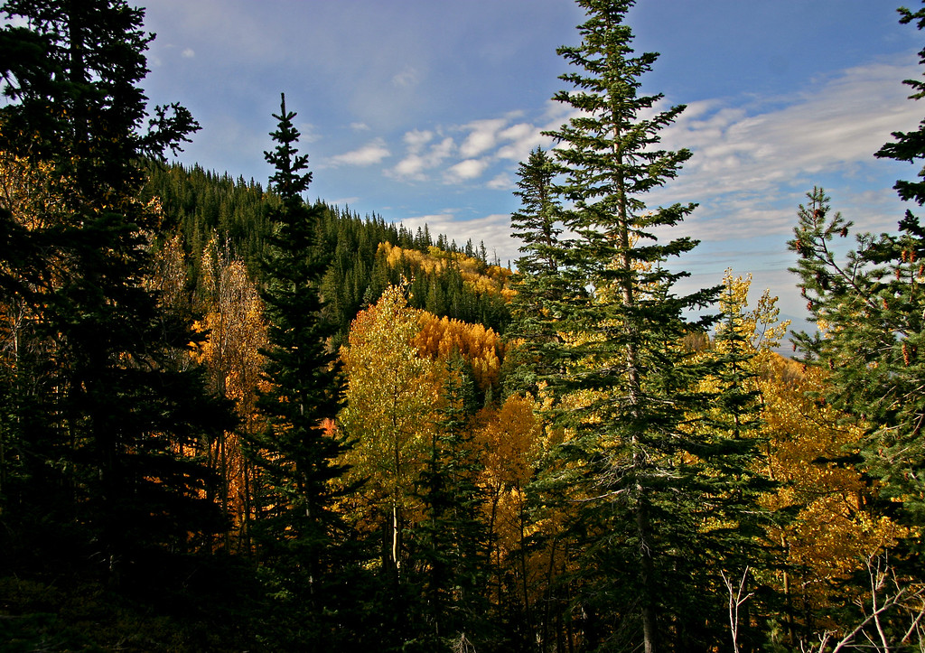 Fall color in the Sangre de Cristo mountains near Santa Fe.