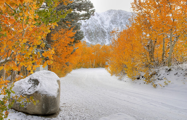 Aspen And Snow on North Lake Road