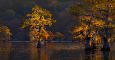 Caddo Lake, Fall foliage, Cypress Grove,