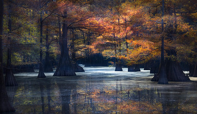 Caddo Lake, Fall foliage, Cypress Grove,  kayak