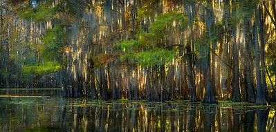 Stayed at Fort Worth, visited Japanese Garden, Then drove 4 hrs to Uncertain to see the Cypress Trees draped with Spanish moss in Caddo Lake