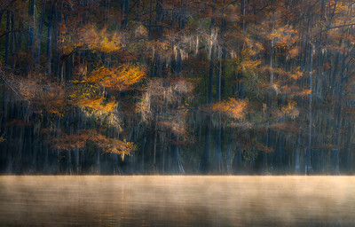 Benton Lake, Caddo Lake, Morning Mist