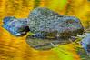 _E7C5774_HDRMercedrivercamp6resized4iphoto