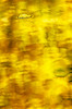_E7C5824_HDRcamp6#3resized4iphoto