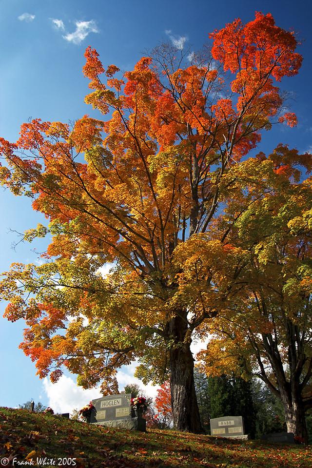 Fall tree & graves #1, Waynesville, NC