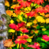 Fall Colors. 16 Sony Nex7