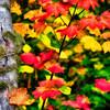 Fall Colors. 16 Sony Nex7