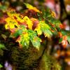 Fall Colors. 3 Sony Nex7
