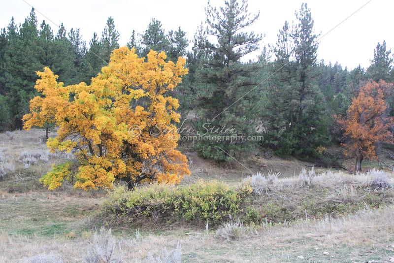 Montana Fall Color_SS83335