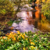 Fall Colors. 1 Sony Nex7