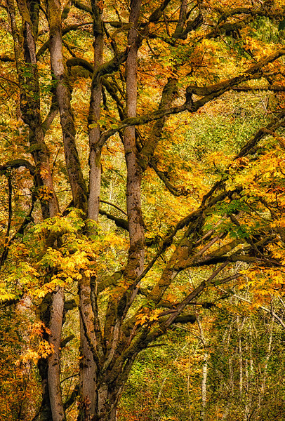 Fall Colors. 13 Sony Nex7
