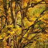 Fall Colors. 13 Sony Nex7