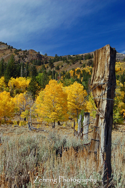 Remnants of a cattle fence add a strark contrast to this fall afternoon scene.
