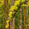 Fall Colors. 17 Sony Nex7