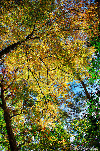 Through the fall canopy