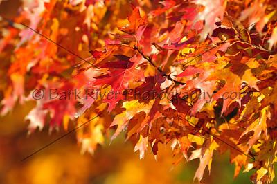 2008 Fall Colors 3050