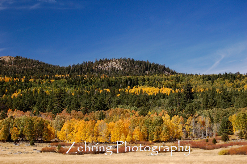 Quaking aspens accent this mountainside near the Kit Carson Pass off Hwy 88.