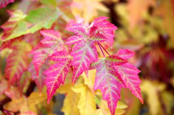 Fall Colors in Idaho