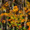 Fall Colors. 5 Sony Nex7