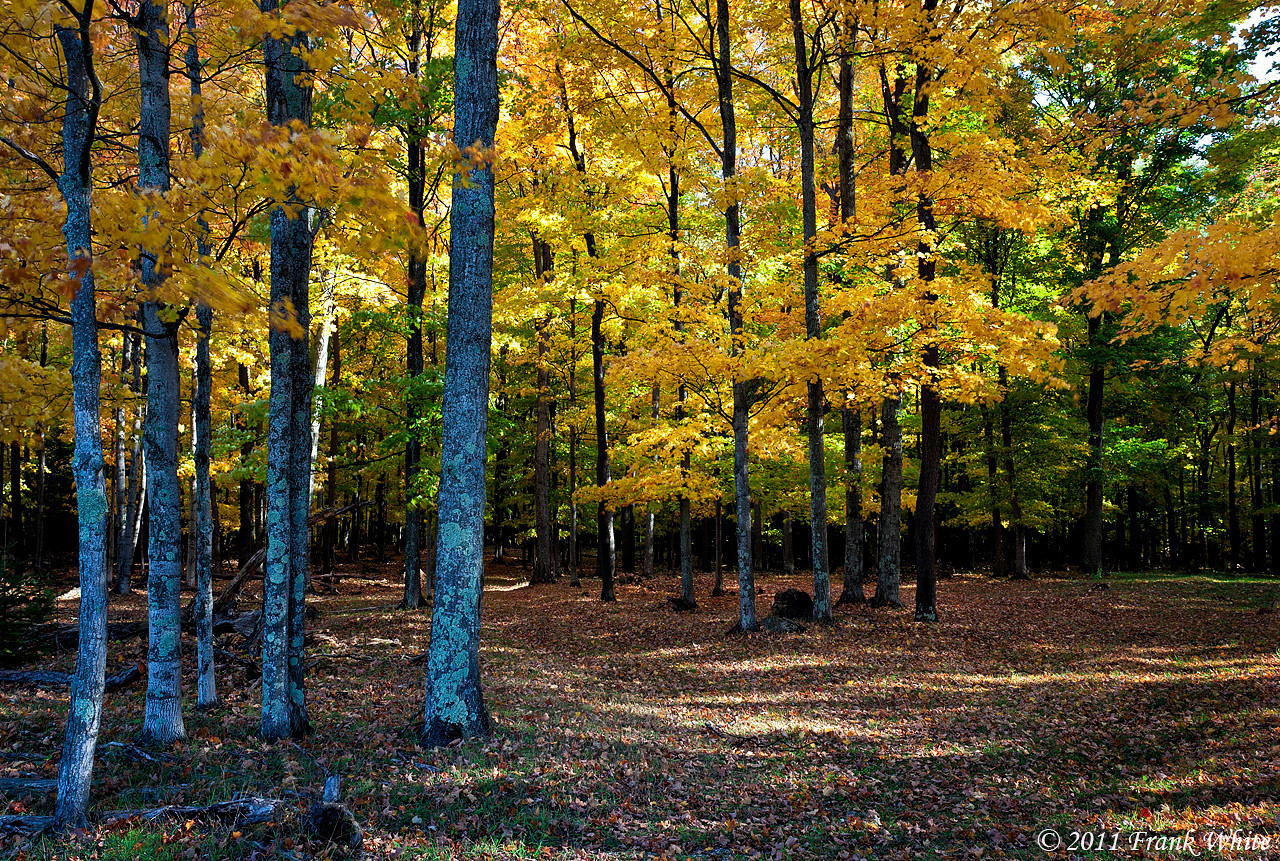 Fall colors, northern Michigan.