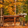Fall Colors. 14 Sony Nex7