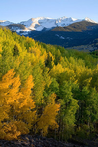 Sunset aspen near Kebler Pass