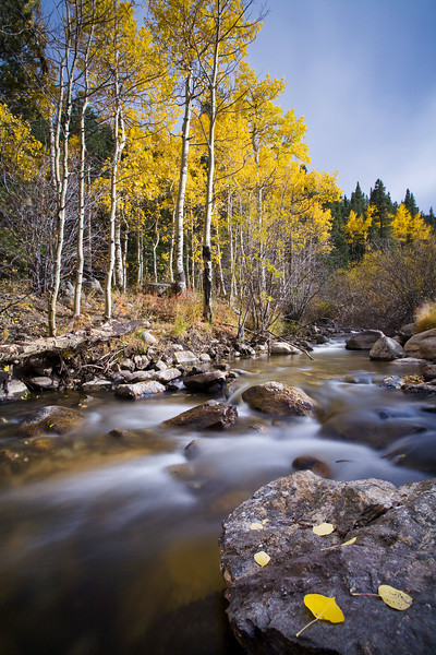 """""""Resting""""  While Southwestern Colorado is the most famous area of the state for fall colors, there are plenty of pockets of beautiful aspens all along the Front Range, as I've found here near the Mt. Evans Wilderness Area.  After a long season, these fallen leaves appear to be resting along the river, enjoying the view."""