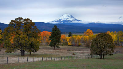 Mt Adams from Conboy NWR