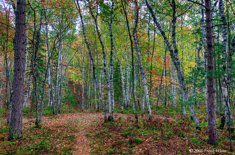 Woods in fall; Twelve mile beach campground, Pictured Rocks National lakeshore, Lake Superior, Michigan upper peninsula