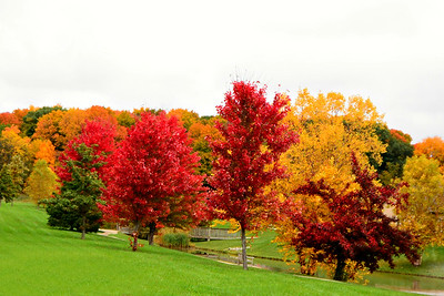 Fall Colors  2014