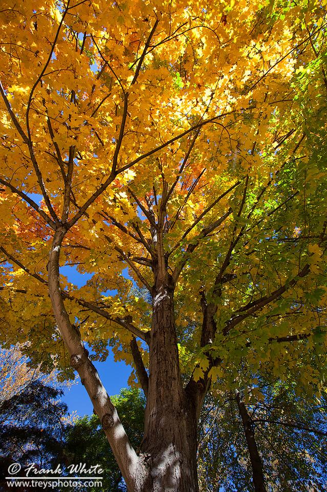 Taken at Brookside Gardens, Wheaton, MD