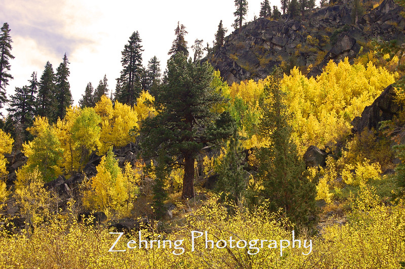 "Classic contrasts of color during the fall ""peak""."