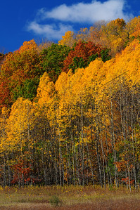 Fall Colors Loew Lake131