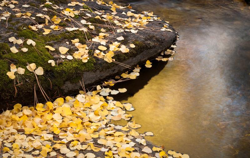 Golden Creek in Fall