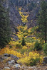 The fall color flows up through this run-off gorge in the Sierra Nevada range alongside Hwy 88.