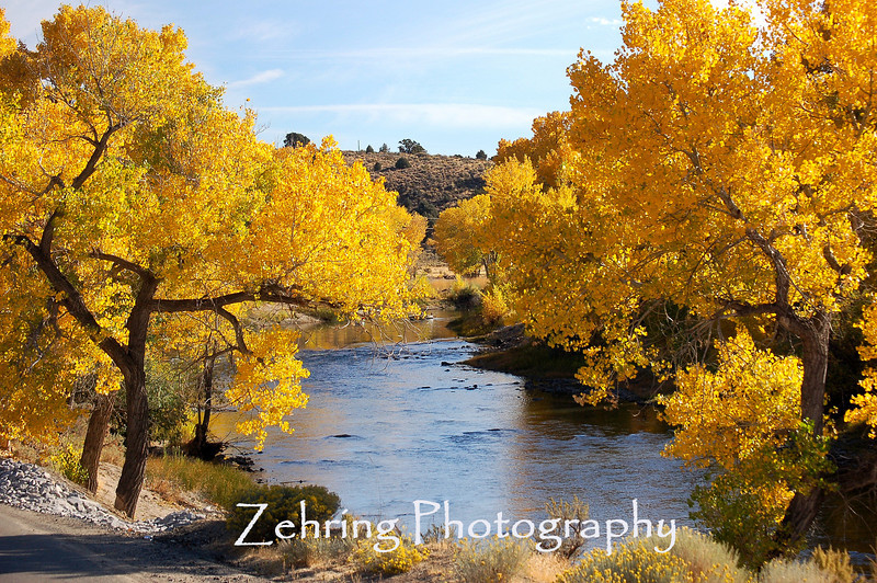 Cottonwoods give dramatic emphasis to the color and landscape of the Carson River just minutes from downtown Carson City.