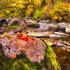 Fall Colors. 7 Sony Nex7