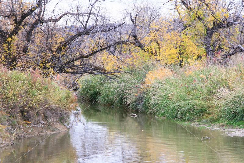 Montana Stream_SS83310