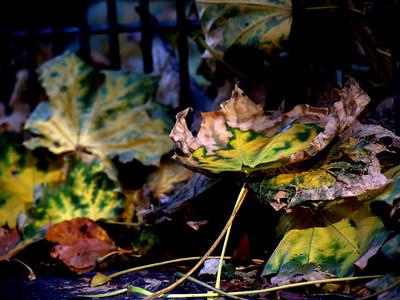 Fall Colours 5