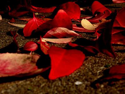 Fall Colours 6