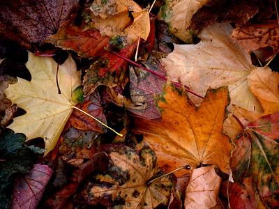 Fall Colours 7